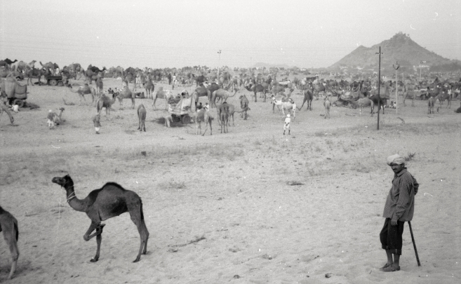 India_Rajasthan_Pushkar_CamelFair_06