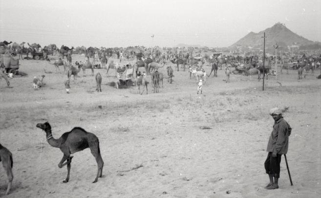 India_Rajasthan_Pushkar_CamelFair_06