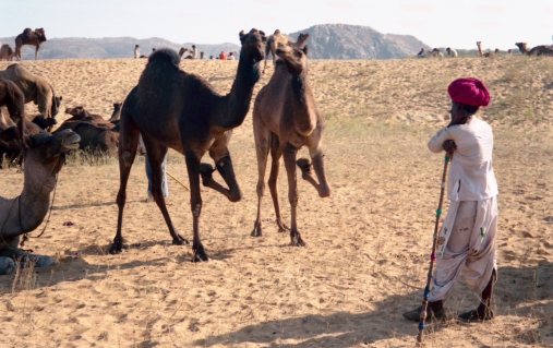 India_Rajasthan_Pushkar_CamelFair_14