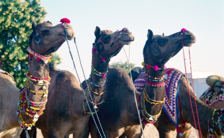 India_Rajasthan_Pushkar_CamelFair_26