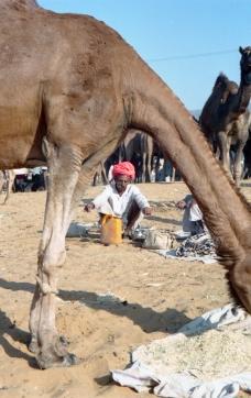 India_Rajasthan_Pushkar_CamelFair_35